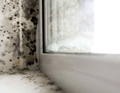 Tips to prevent molds in house