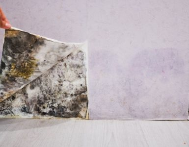 Health problems caused by mold in the house